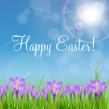 Happy Easter Card with Crocuses Vector Royalty Free Stock Images