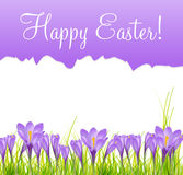Happy Easter Card with Crocuses Vector Stock Images