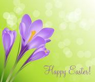 Happy Easter Card with Crocuses Vector Stock Photos