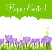 Happy Easter Card with Crocuses Vector Royalty Free Stock Image