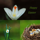Happy Easter card. Easter set. Happy Easter card. Spring Easter set with quail eggs and flowers Royalty Free Stock Photography