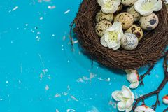 Happy Easter card. quail eggs in a nest with a flowering branch stock photo