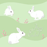 Happy easter card. White rabbits and tulips on green background Royalty Free Stock Images