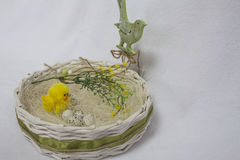 Happy easter card,. Wicker basket with quail eggs,shavings, chicken,willow twig and bird on the white background. happy easter card Stock Image