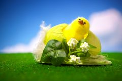 Happy easter chick Stock Image