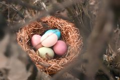Happy Easter. Colorful Easters eggs in a nest with feathers. Happy Easter. Colorful Easters eggs in a nest with feathers royalty free stock image