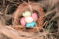 Happy Easter. Colorful Easters eggs in a nest with feathers. Happy Easter. Colorful Easters eggs in a nest with feathers stock image