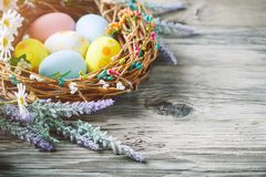 Happy Easter. Congratulatory easter background. Easter eggs and flowers. Royalty Free Stock Photo