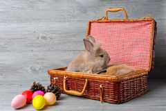 Happy Easter Day. The brown rabbit in the basket on the wooden background. Cute Easter bunny rabbit with painted Easter eggs on stock photography