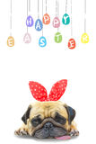 Happy Easter Day. Pug wearing rabbit Bunny ears paint eggs. Royalty Free Stock Images