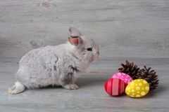 Happy Easter Day. Rabbit with colorful Easter eggs on wood. Cute Easter bunny rabbit with painted Easter eggs on wood background stock images