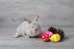 Happy Easter Day. Rabbit with colorful Easter eggs on wood. Cute Easter bunny rabbit with painted Easter eggs on wood background stock photos