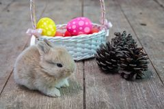 Happy Easter Day. Rabbit with colorful Easter eggs in a wooden basket tied with ribbon. Cute Easter bunny rabbit with painted stock photo