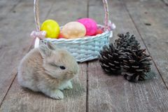 Happy Easter Day. Rabbit with colorful Easter eggs in a wooden basket tied with ribbon. Cute Easter bunny rabbit with painted stock image