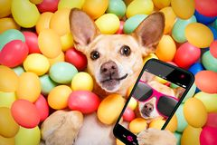 Happy easter dog with eggs selfie Stock Photos