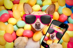 Happy easter dog with eggs selfie Royalty Free Stock Photo