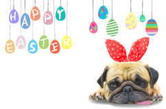 Happy Easter. Dog Pug wearing rabbit bunny ears sleep rest near pastel colorful eggs with copy space. Royalty Free Stock Images