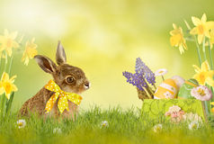 Happy Easter; easter bunny Royalty Free Stock Photography