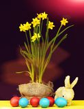 Bicolor Easter decoration. Happy easter egg. holiday bunny and eggs, spring flower backround Easter decoration. Bright yellow daffodils growing in pot wrapped Royalty Free Stock Photography