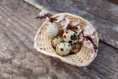 Happy easter with flowers and quail eggs. Happy easter with spring flowers and quail eggs on basket Stock Photos