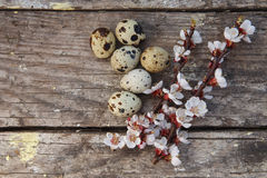 Happy easter with flowers and quail eggs. Happy easter with spring flowers and quail eggs on basket Royalty Free Stock Photo