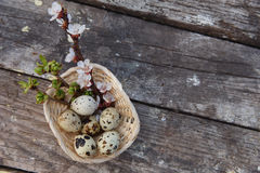 Happy easter with flowers and quail eggs. Happy easter with spring flowers and quail eggs on basket Royalty Free Stock Images