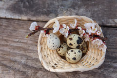 Happy easter with flowers and quail eggs Stock Photography