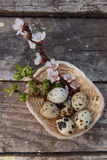 Happy easter with flowers and quail eggs. Happy easter with spring flowers and quail eggs on basket Stock Photography