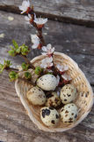 Happy easter with flowers and quail eggs. Happy easter with spring flowers and quail eggs on basket Stock Image