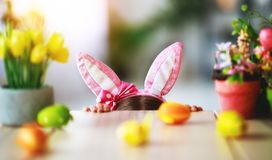 Happy easter! funny child girl with rabbit ears and . eggs. Happy easter! funny child girl with rabbit ears and eggs at home in kitchen stock photography