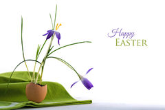 Happy easter greeting card, delicate blue crocus flowers planted Stock Photos