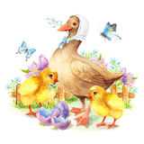 Happy Easter greeting card Duck and chicken Royalty Free Stock Photo