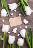 Happy Easter greeting card with white tulip and chocolate eggs and bunny stock photography