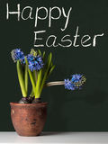 Happy Easter with Hyacinths Stock Photography