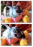 Happy Easter from Kodiak! (EXPLORE) Royalty Free Stock Photo