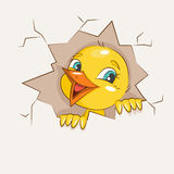 Happy Easter! Little charming chicken. Royalty Free Stock Images