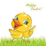 Happy Easter! Little chicken. Royalty Free Stock Photography