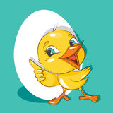 Happy Easter! Little chicken. Stock Image