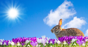 Happy easter rabbit. Easter rabbit sitting in a flower field Royalty Free Stock Photos
