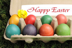Happy Easter rainbow colored eggs in egg carton. Happy Easter rainbow colored eggs on grass in egg carton with sign Royalty Free Stock Image