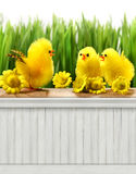 Happy Easter Spring background/backdrop Royalty Free Stock Photography