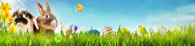 Happy Easter spring banner with little bunnies. Happy Easter spring banner with two cute little bunnies, yellow daffodils and a butterfly in a spring meadow with royalty free stock image