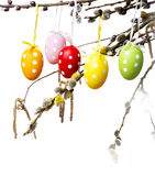 Easter eggs on a spring  branch Stock Photo
