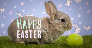 Happy Easter text with Easter rabbit with egg in front of pattern Stock Photography