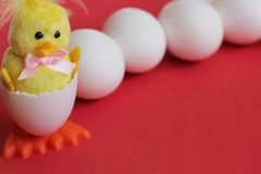 Happy Easter. Yellow toy chicken baby hatched from an egg is located near a row of white chicken eggs on a red background. Symbol stock photos
