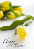 Happy Easter yellow tulips Stock Images