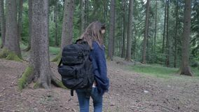 Happy ecologist woman trekking on mountain forest exploring nature and trees  -. Happy ecologist woman trekking on mountain forest exploring nature and trees stock video footage