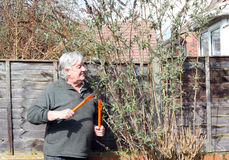 Happy gardener pruning a bush. Stock Images
