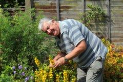 Happy elderly male gardener. stock photos