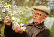 Happy elderly man. In a garden royalty free stock images